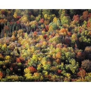 http://porexcut.com/5970-7260-thickbox/landscape.jpg