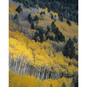 http://porexcut.com/5973-7266-thickbox/landscape.jpg
