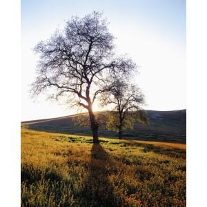 http://porexcut.com/5974-7274-thickbox/landscape.jpg