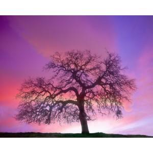 http://porexcut.com/5983-7290-thickbox/landscape.jpg