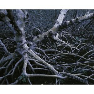 http://porexcut.com/5996-7328-thickbox/landscape.jpg