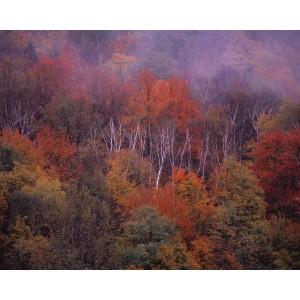 http://porexcut.com/5999-7334-thickbox/landscape.jpg